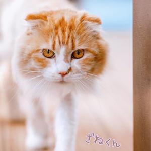 2021年5月funny卒業猫さん達②(*^_^*)✨