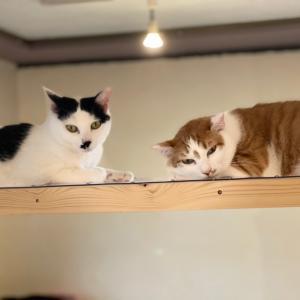 funnyCatの猫達
