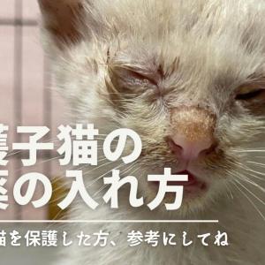 子猫の目薬のさし方動画