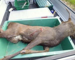 10月18日有害鳥獣捕獲「猪・鹿・狸」