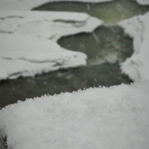 たまに降る雪
