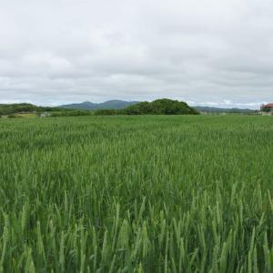 初夏の北海道
