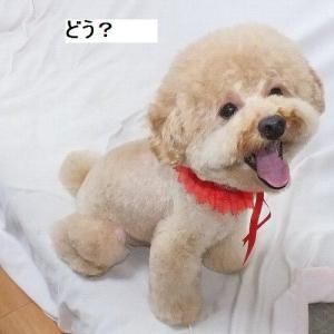 令和8月トリミング☆