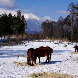 木曽馬の里 雪の放牧と御嶽山