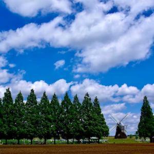 あけぼの山農業公園 ~ポピーと青空と白い雲~