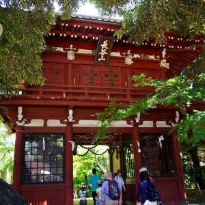 本土寺    松戸のあじさい寺