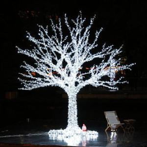 光の樹と木の精霊に出会って絵を描いた不思議な話