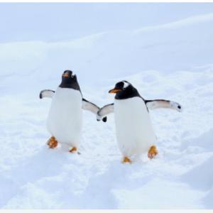 「ペンギンは宇宙人説」を宇宙人と語った件