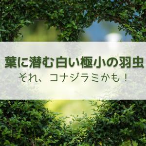【野菜や草花の病害虫】葉に触れると舞い飛ぶ白い小さな羽虫、それコナジラミかも?