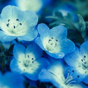 お花見の意味とコノハナノサクヤヒメについて