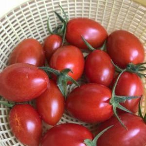 我家の家庭菜園も収穫時期到来!(^^)!