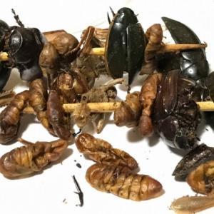 散歩の途中で「昆虫食」を購入