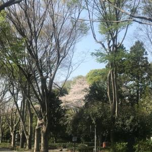 さくら咲く県立美術館の周りを散策