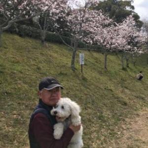 清水の船越堤へ花見に!(^^)!