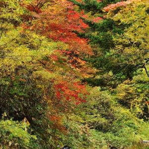 秋の空気をひとり吸い込む