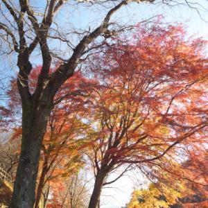 紅葉も今年はそろそろ終わりですね 栃木の紅葉の知られざる?名所