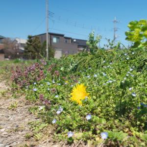 春のお散歩旅 1 二宮から大磯丘陵 ちょっと長い距離歩いてみた