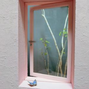 window 3 小物類を追加したよ 白樺 オオムラサキ アイドールvol.58は中止