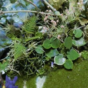 腐海の尽きるところ 11 大切なのは植物の密度