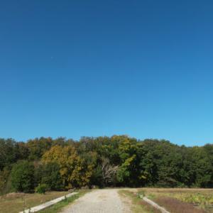 秋のお散歩旅 11 お買い物散歩 遠藤原 いちめんの野菜畑