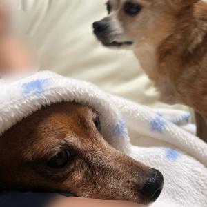 犬部屋のエアコン対策
