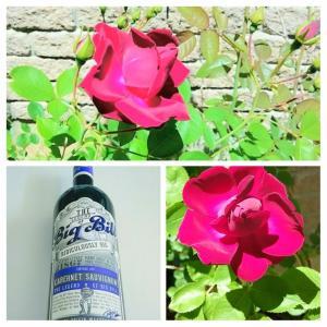 薔薇が咲いたぁ(歌:笑)カナダの薔薇、英語で「朝起きは三文の徳」は?まさに朝、英語版のその生き物の行動を目撃^^!ラグビーのワインとイタリアンディナー。