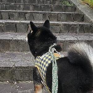 ろく、石畳の階段上るぞ!