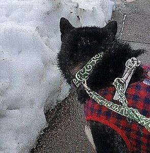 雪を横目に走るろく