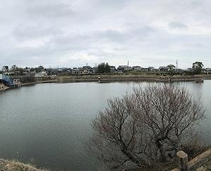 2019/03/21 近所の池