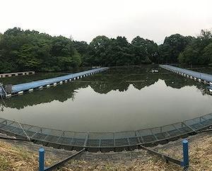 2019/06/07 大安池