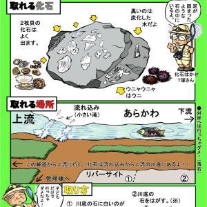【巴川キャンプ場】化石チラシできましたが・・・