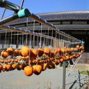篠窪(しのくぼ)にて 干し柿を作っている民家にお邪魔した(2019/11/10)