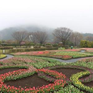篠窪(しのくぼ)の隣町 「風の吊り橋」で満開の桜と五輪のチューリップを楽しむ(2020/03/31)
