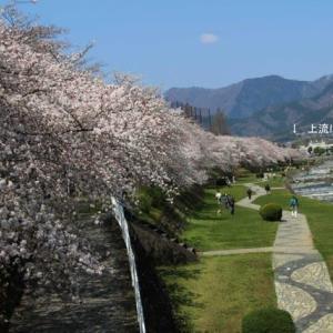 篠窪(しのくぼ)の隣町 「水無川」の桜は満開、& 弘法山付近の様子(2020/04/02)