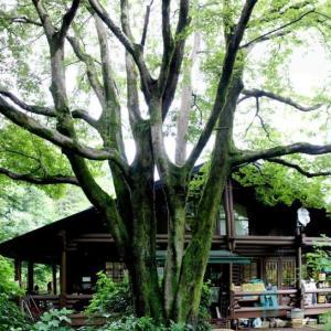 篠窪(しのくぼ)の隣町 くず葉の家で寛ぐ(2020/07/29)