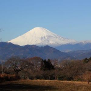 篠窪(しのくぼ)から見る 久しぶりの真白き富士 (2021/01/25)