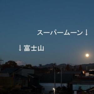 篠窪(しのくぼ)より 遠いスエズ運河でタンカー座礁解決をお月さまが手伝う (2021/04/19)