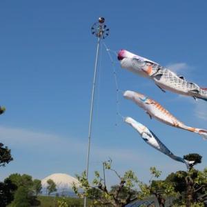 篠窪(しのくぼ)の隣町 四季の里付近で「富士山より高い鯉のぼり」が泳いでいた (2021/04/22)