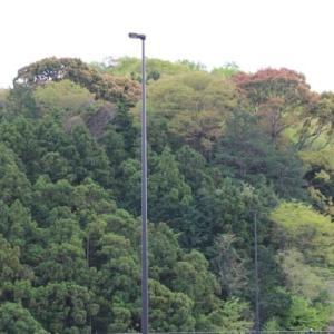 篠窪(しのくぼ)は大雨の後に「萌黄色の景色」に復活しました(速報 2021/04/15)