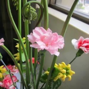 篠窪(しのくぼ)の隣町 渋沢駅の春の花達 (2021/04/30)