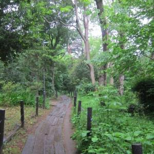 篠窪(しのくぼ)から遠く離れた都会「駒場野公園の緑」を楽しむ (2021/5/13)