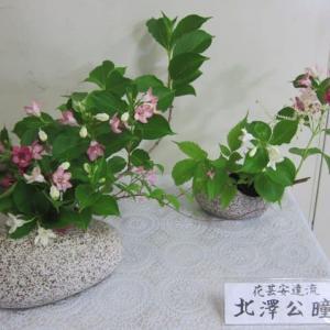 篠窪(しのくぼ)の隣町 渋沢駅の花が綺麗 (2021/05/13)