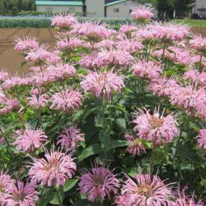 篠窪(しのくぼ)の隣町 平塚市の木村植物園で花を楽しむ(2021/06/15)