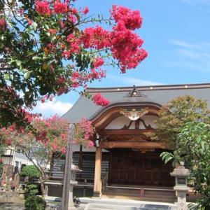 篠窪(しのくぼ)の隣町 秦野市 大用寺の百日紅を見に行く(2021/09/15)