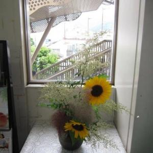 篠窪(しのくぼ)とその隣町で見た向日葵(ひまわり)は不思議な花です(2019/08/16)