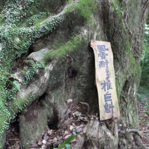 篠窪(しのくぼ)の三嶋神社「椎ノ木杜」は梅雨明けの苔が綺麗(2019/08/04)