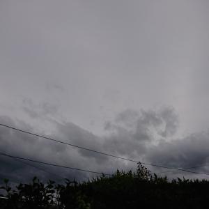 風が強い一日~(´・ω・`)