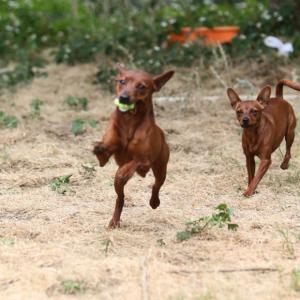 涼しい日は犬運動日和
