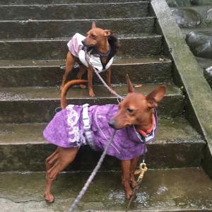 雨で散歩中止にしちゃうと…