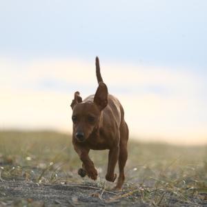 犬への暮らしをよくするには飼い主の知識が大事!